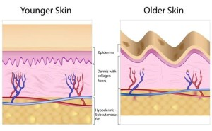 Collagen chart younger and older courtesy Ann Marie Gianni