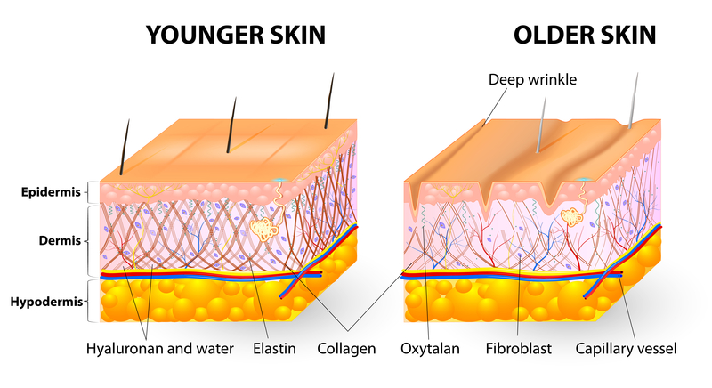 chart older and younger skin Phytoceramides